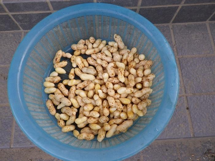 収穫3_15_09_21