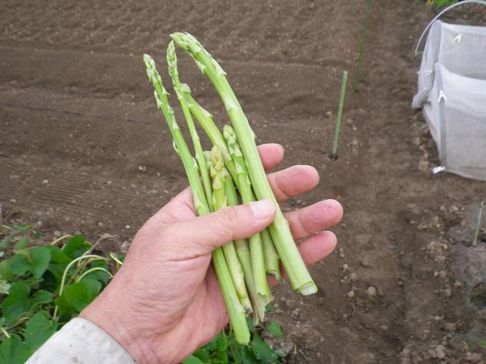 収穫2_15_09_21