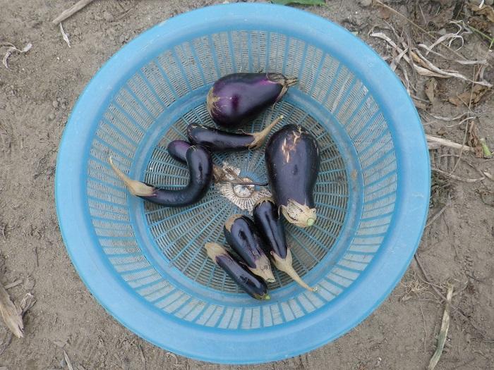 収穫4_15_09_21