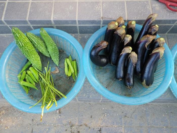 収穫1_15_09_22