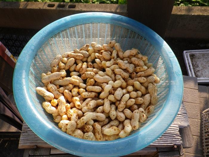 収穫2_15_09_22
