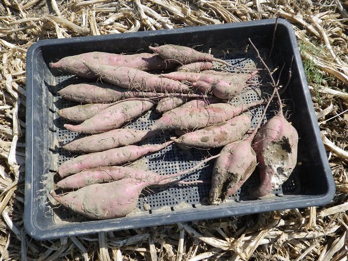 収穫3_15_09_22
