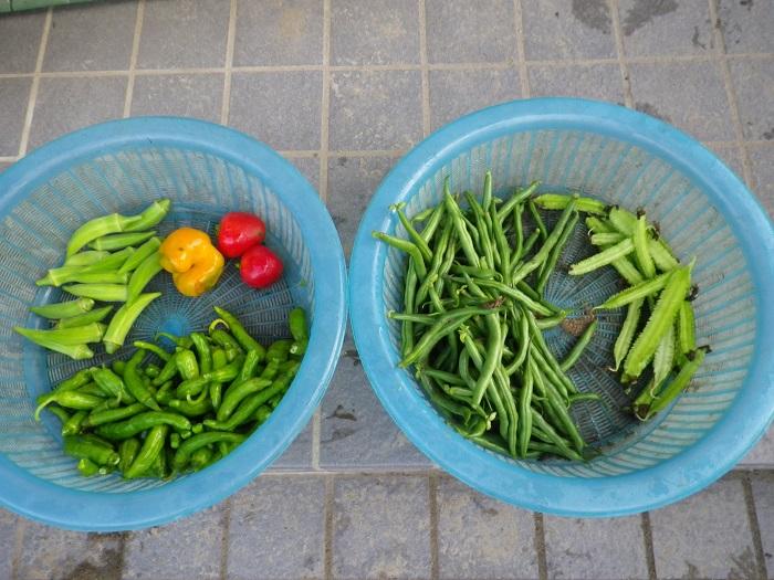 収穫1_15_09_26