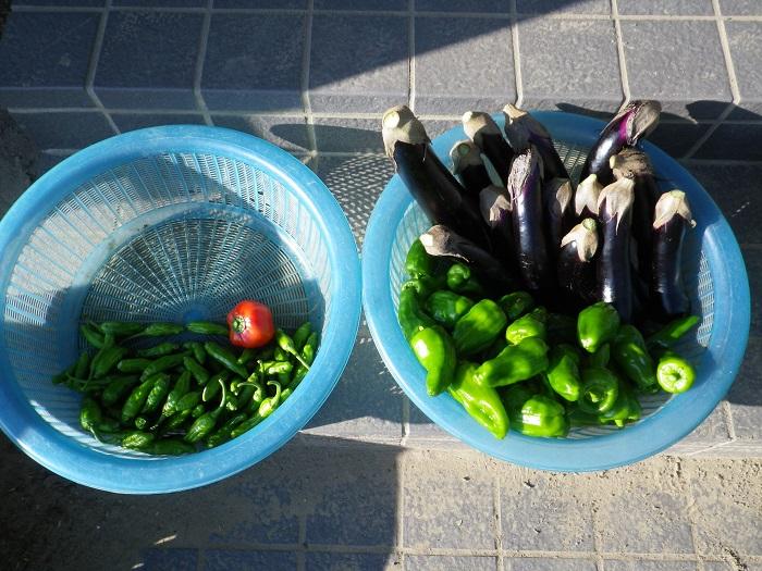 収穫1_15_09_27