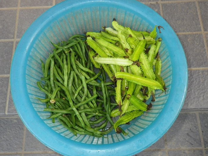 収穫15_09_28