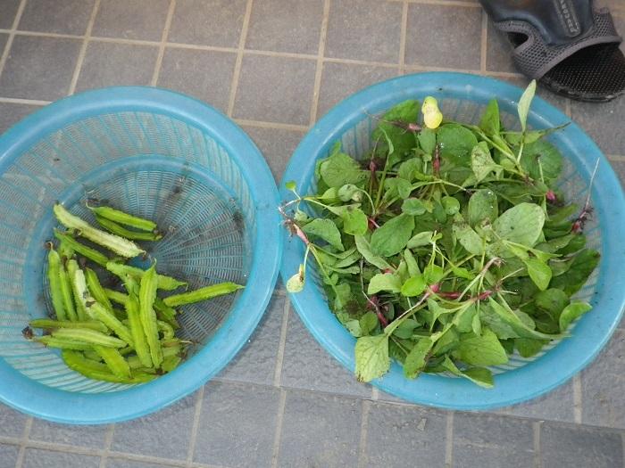 収穫15_09_30
