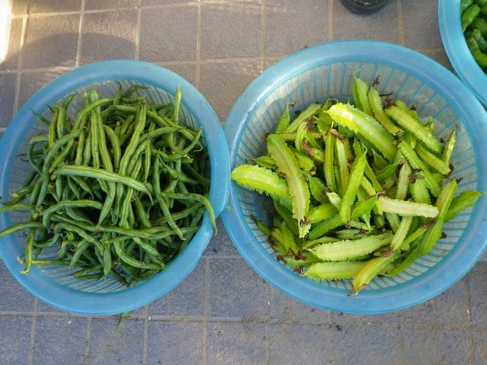 収穫2_15_10_04