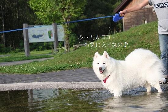 2IMG_9460.jpg