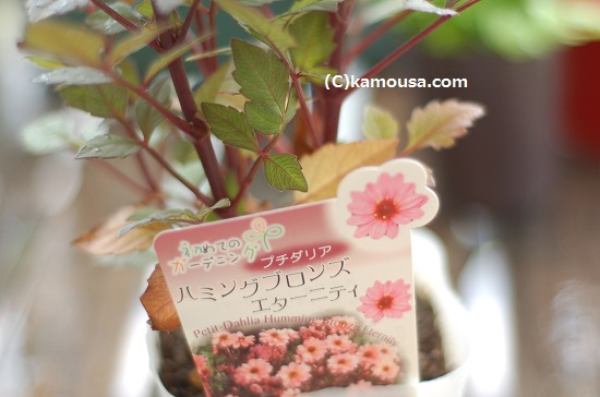 blog0908 (4)