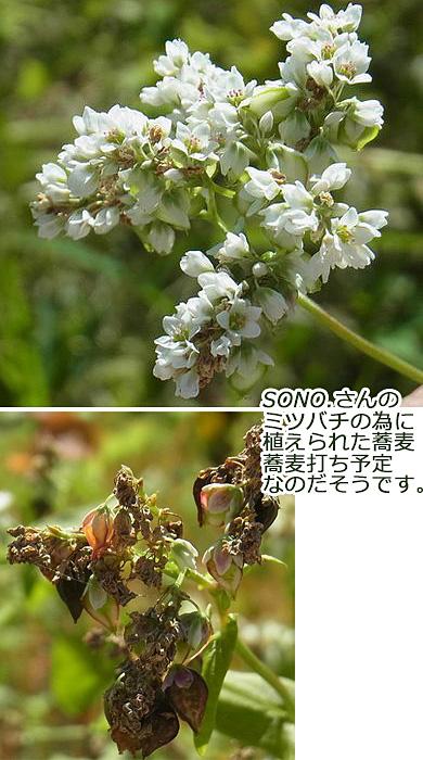 151009-1.jpg