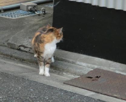 どこいく猫1