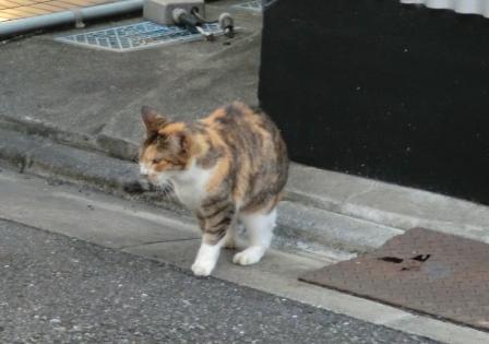 どこいく猫2