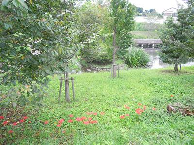 荻野川沿いで