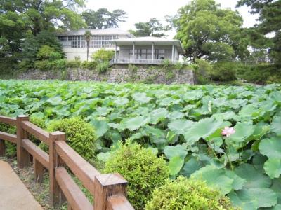 小田原城蓮池