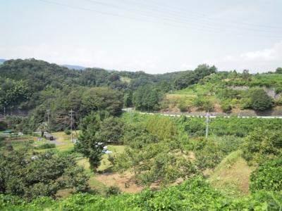 井ノ口旧道の