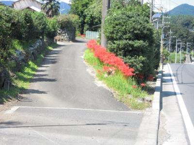 新道の彼岸花