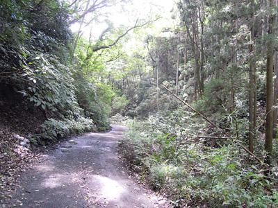 谷戸川の道
