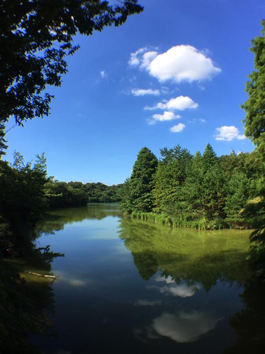 岩本橋からの風景。