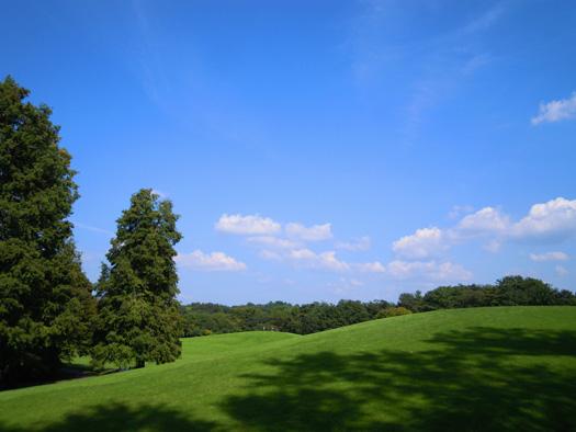 芝生と青空。