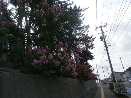 8月に花2
