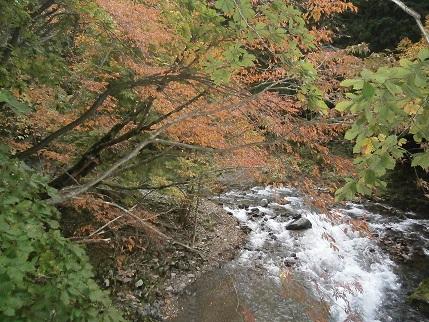 真瀬川の秋2