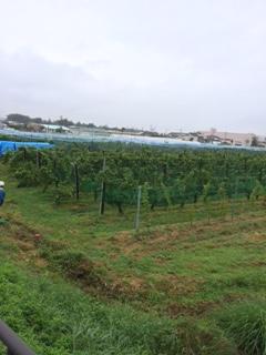 2015 09 07 SB収穫-1