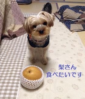 梨さん、ください。