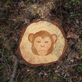 森林破壊04