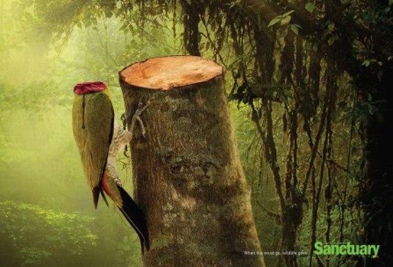 熱帯雨林破壊