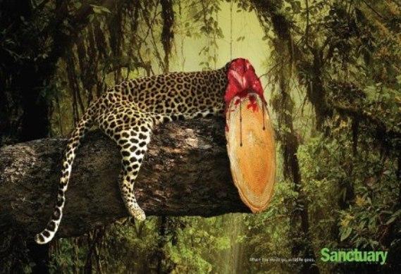 熱帯雨林破壊00