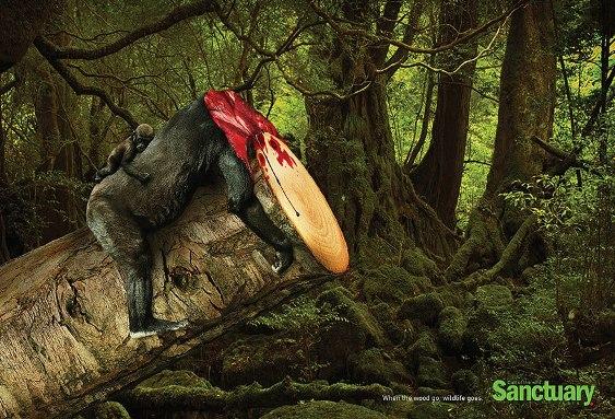 熱帯雨林破壊01