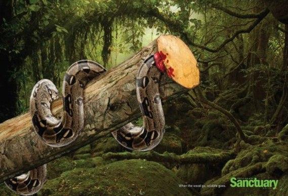 熱帯雨林破壊02