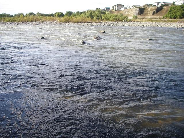 PA020489冬季釣り場上流エサ釣り区域.jpg