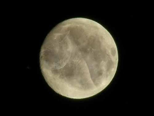 満月グリオ