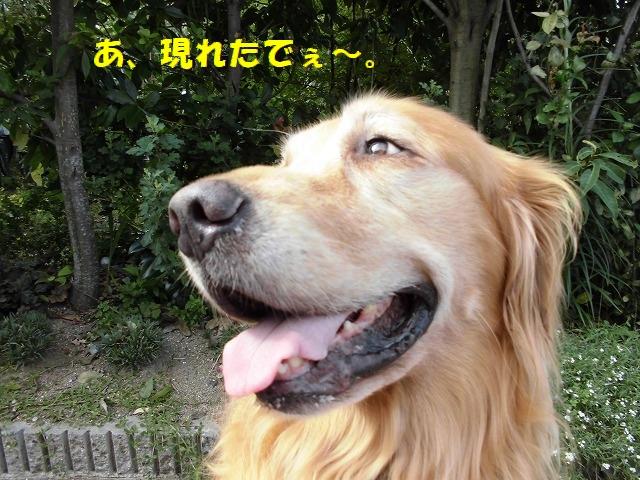 CIMG0127_20150905214559b6b.jpg