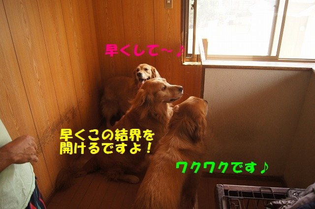 DSC06660.jpg