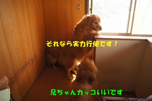DSC06662.jpg
