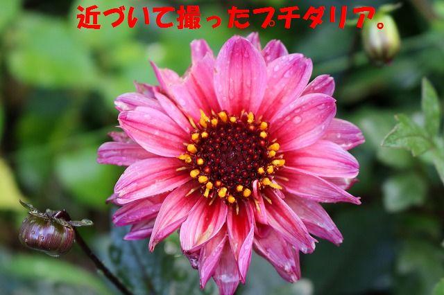 IMG_0221_20150915192739cab.jpg
