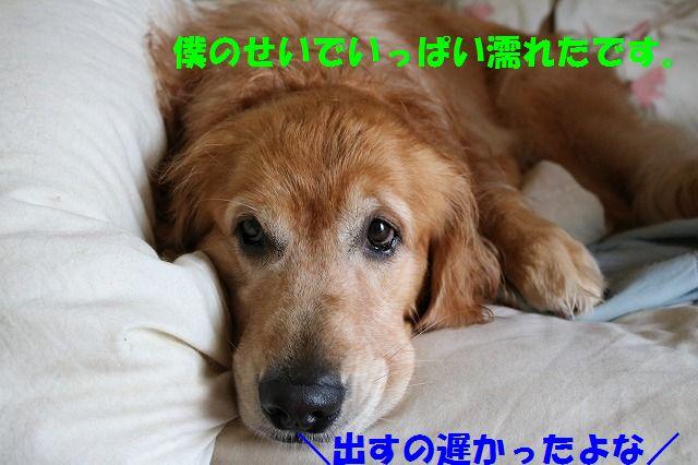 IMG_0438.jpg