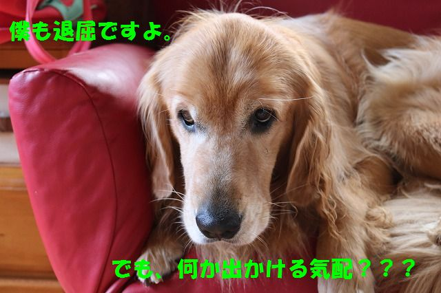IMG_0530.jpg