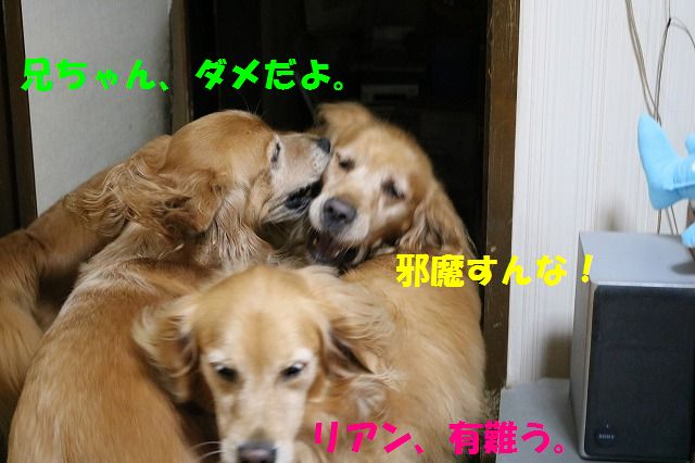 IMG_1362_20150925192406202.jpg