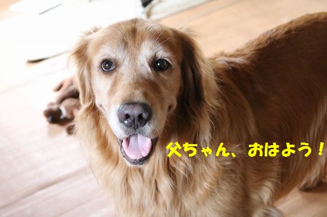 IMG_1447_20150926215232b4d.jpg