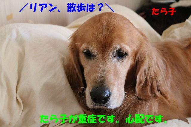 IMG_2323_201510022043164ab.jpg