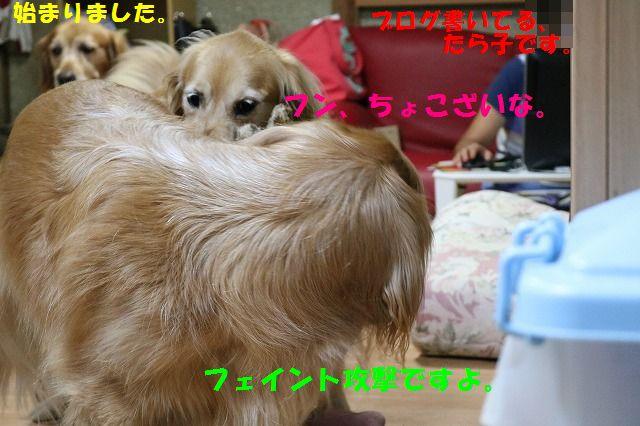 IMG_2444.jpg