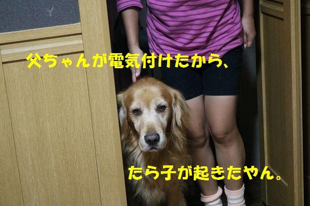 IMG_2547.jpg