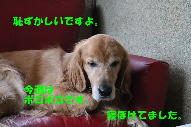 IMG_2868.jpg