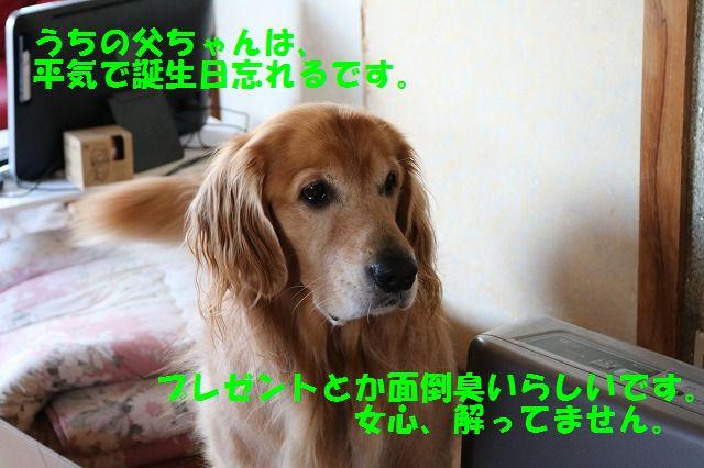 IMG_2931_2015101220272253f.jpg