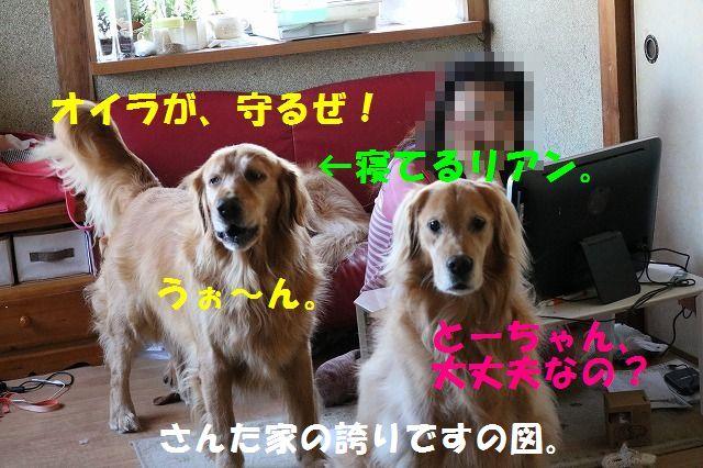 IMG_3147_201510132157589fa.jpg