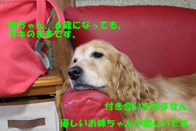 IMG_3347.jpg