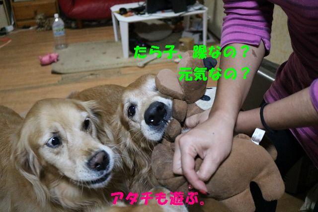 IMG_3559.jpg